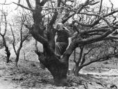 Среди дерева